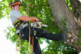 Tree surgery and landscaping contractors in Guildford