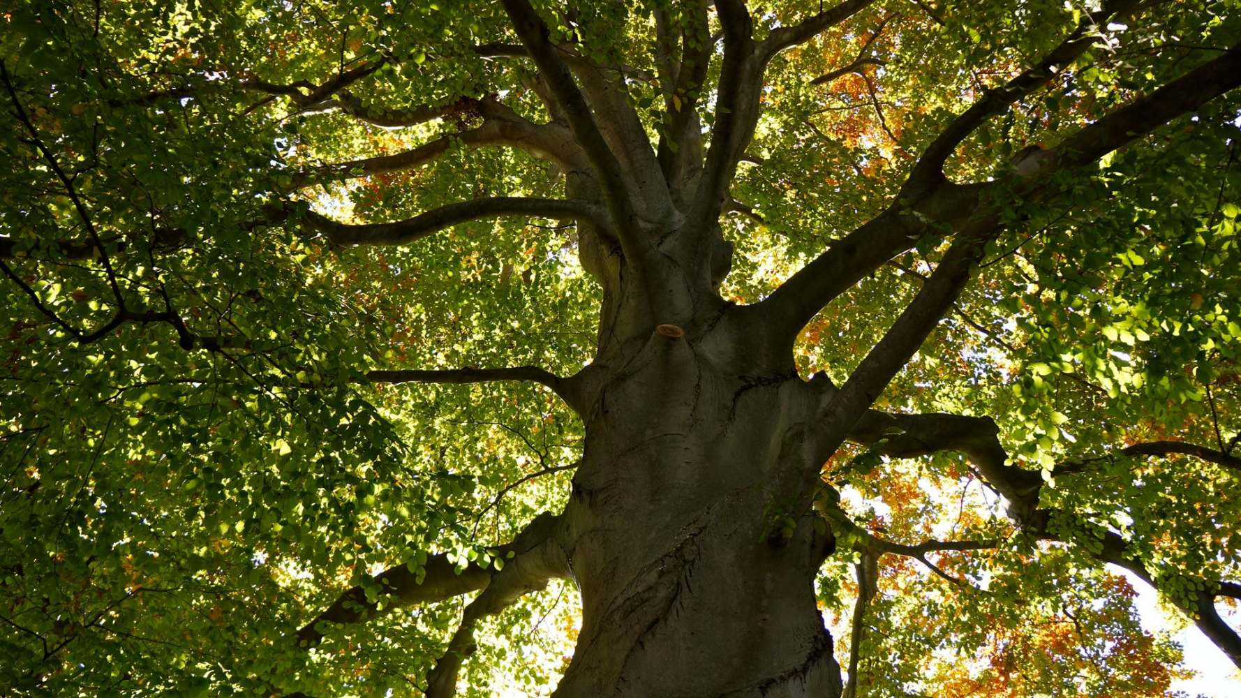 When To Call Skilled Tree surgeons in Leatherhead For Tree Pruning?