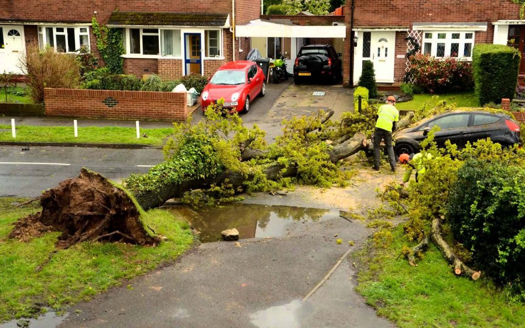 Learn How Tree Surgeons In Leatherhead Assure Their Safety