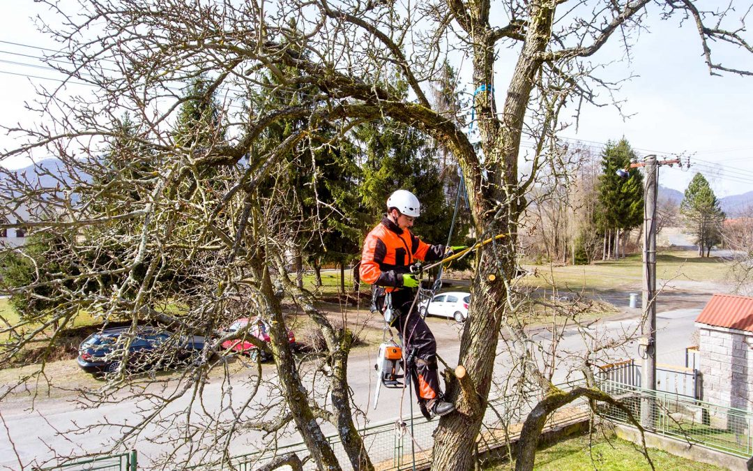 Why Tree Pruning is Good for Your Large Trees