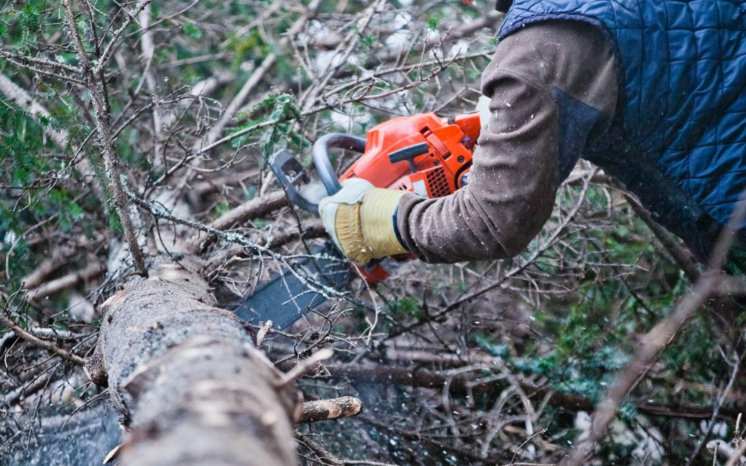When Should You Hire The Best Tree Surgeon To Prune Your Trees?