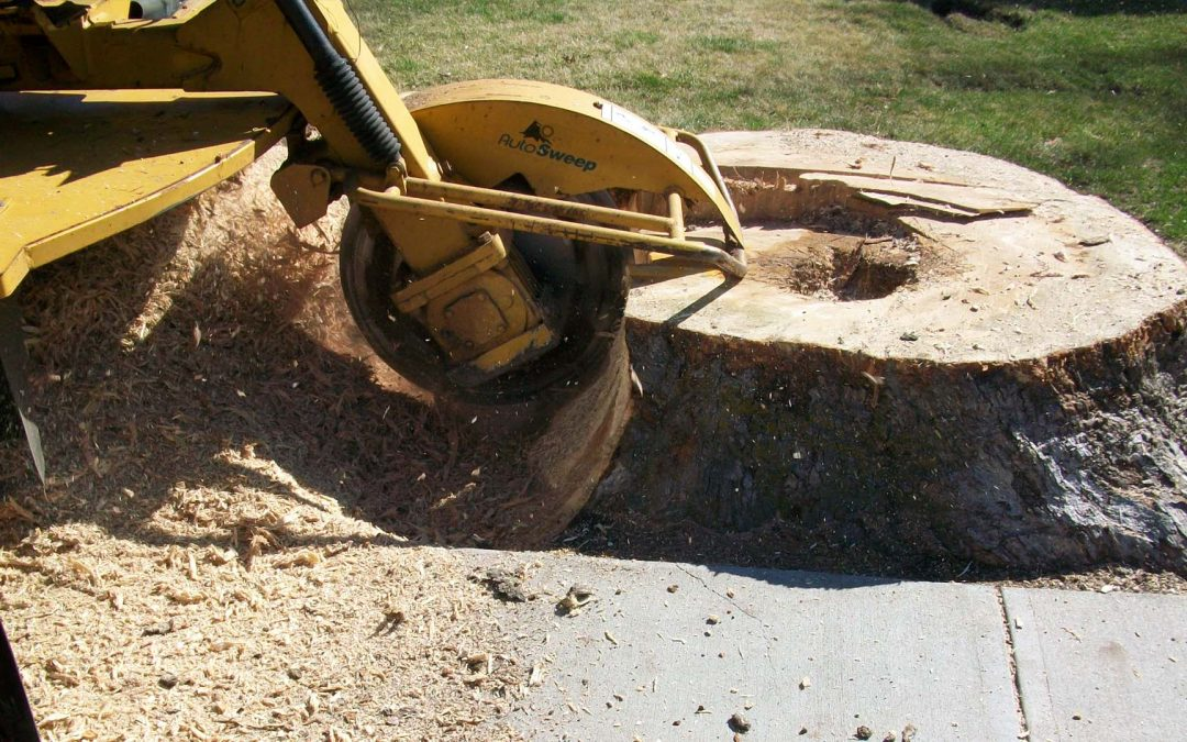 What do you know about Stump Grinding and Stump Removal?