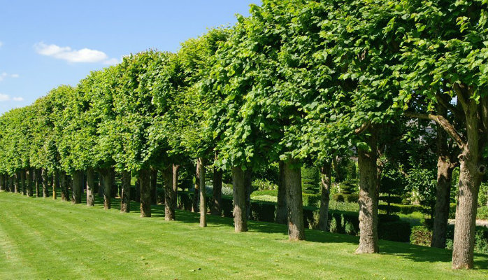 Know What Makes A Qualified Tree Surgeon In Richmond Your Best Choice