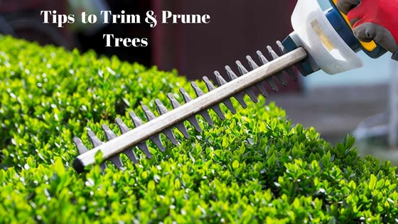 Expert Tips By Tree Surgeons in Richmond to Trim & Prune Your Trees