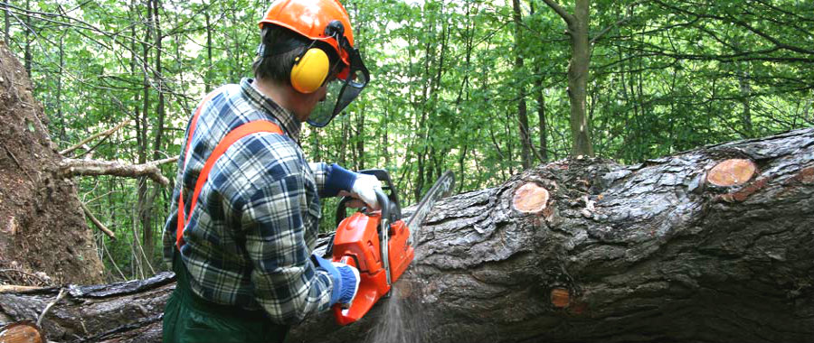 Hiring Tree Surgeons In Guildford? Here's What You Need To Know!