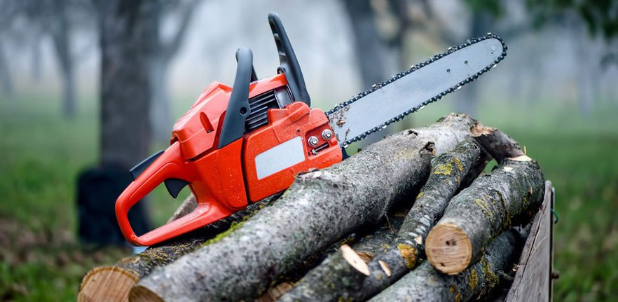 Understand When You Actually Need Tree Surgery In Guildford