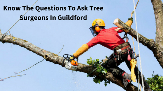 Hiring Tree Surgeons In Guildford? Know The Questions To Ask