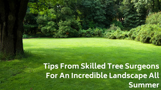 Tips From Skilled Tree Surgeons For An Incredible Landscape All Summer