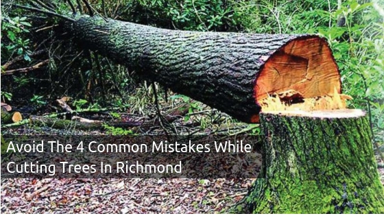 Approach Tree Surgeons And Avoid The Common Mistakes While Cutting Trees