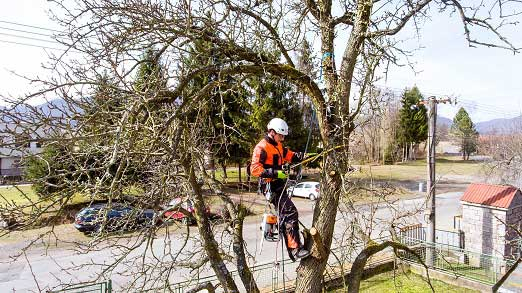 4 Tree Trimming Mistakes Homeowners In Walton On Thames Should Avoid