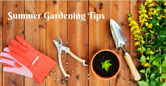 5 Top Summer Gardening Tips From NTPC Qualified Tree Surgeons