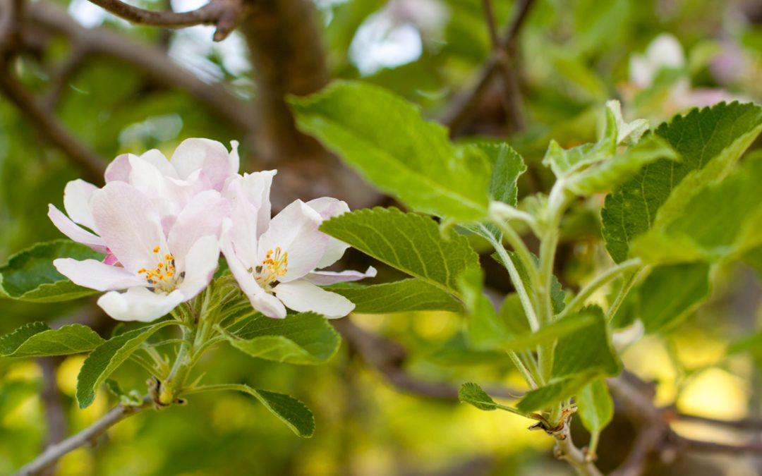 4 Tips From The Best Tree Surgeons To Help Your Garden Bloom In Summer