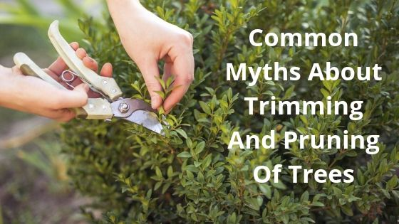 Hire Experienced Tree Surgeons And Debunk The Common Tree Trimming Myths