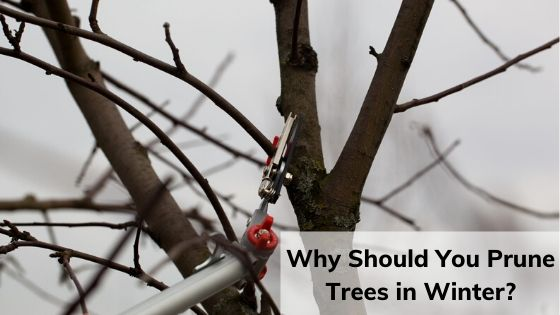 Hire Skilled Tree Surgeons And Prune Your Trees In Winter