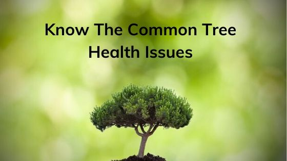 Know The Common Tree Health Issues Before Hiring Tree Surgeons