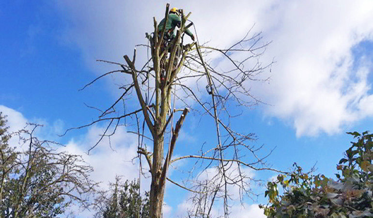 Hire Experienced Tree Surgeons And Increase The Life Of Your Trees