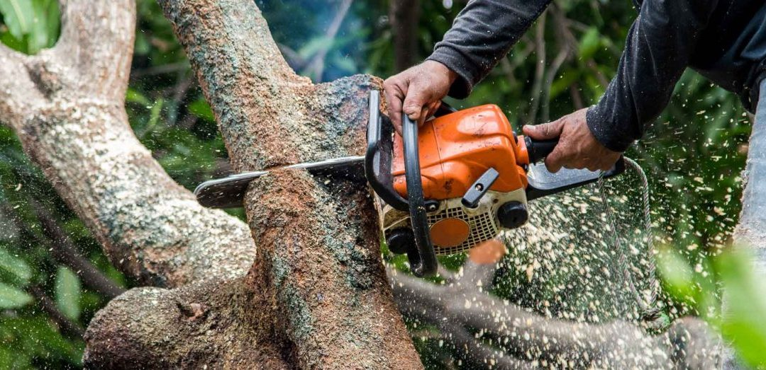 Understanding the Different Techniques of Tree Surgery Implemented by the Tree Surgeons