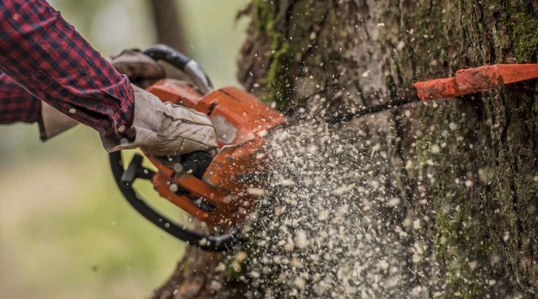 Hire Experienced Tree Surgeons And Ensure The Health Of Your Trees