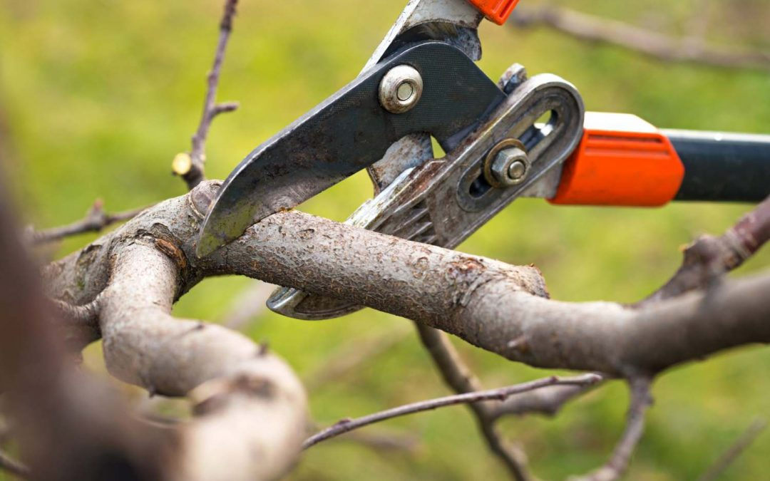 Tips and Techniques on Pruning and Trimming Trees